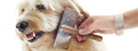 dog grooming de-matting de-shedding